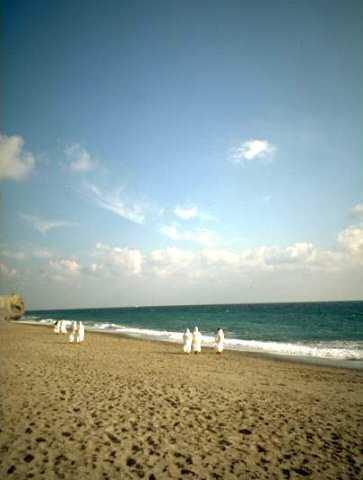 certosine in riva al mare (spaziamento)
