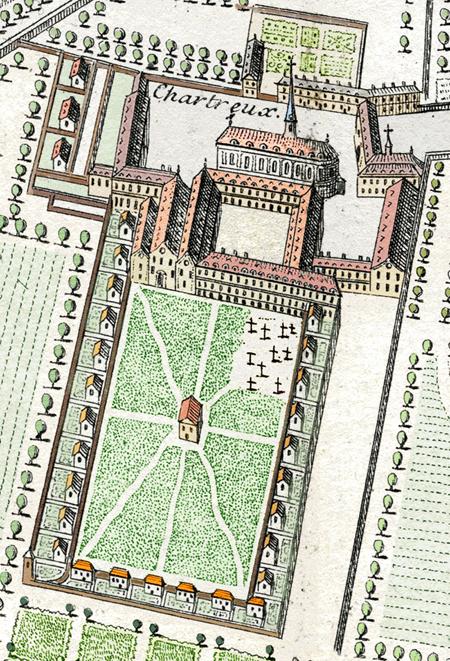 chartreux-1714
